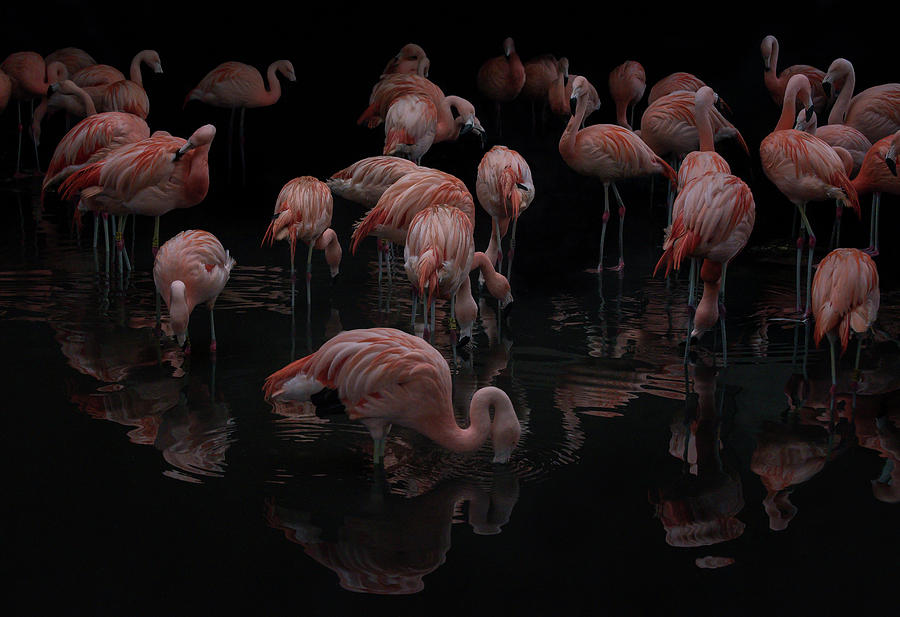 Flamingos Photograph - A Flamboyance of Flamingos by Phillips and Phillips
