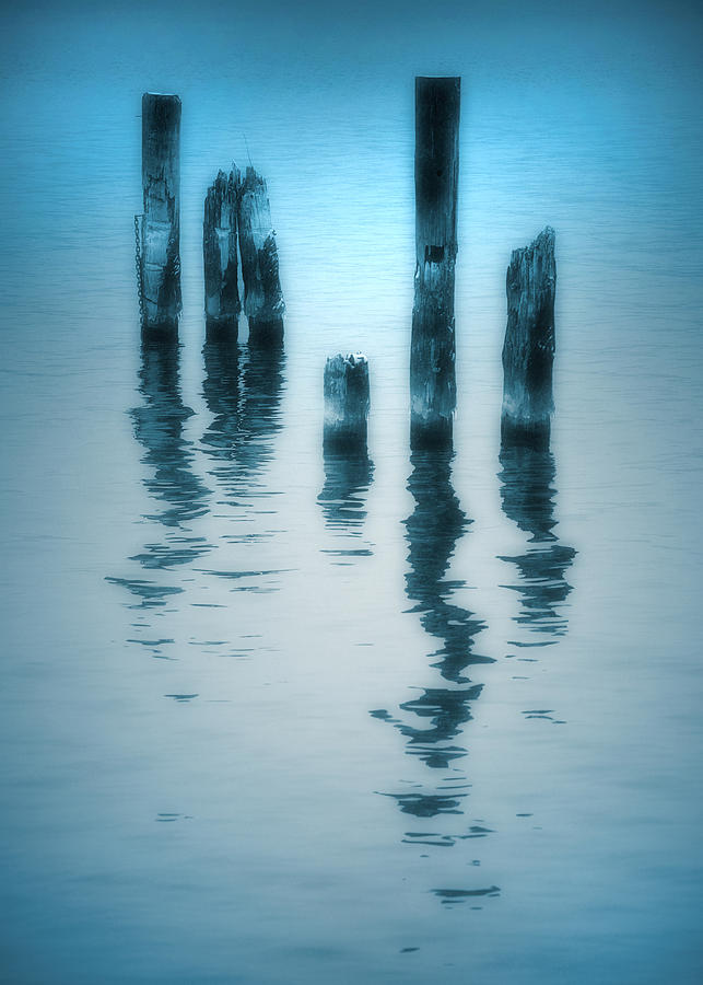Blue Photograph - A Fleeting Blue by Tara Turner