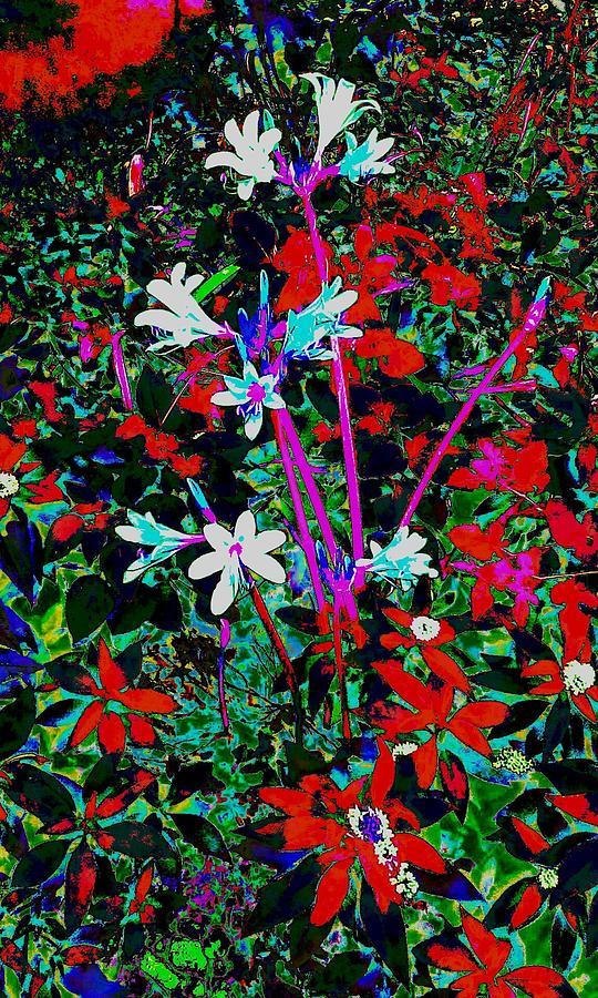 A Floral Scene 2 Photograph