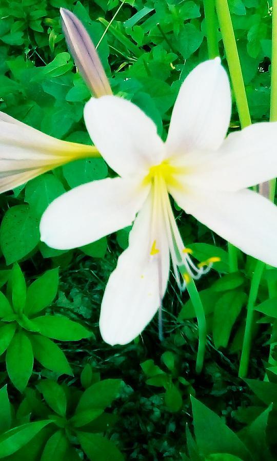 A Flower Photograph