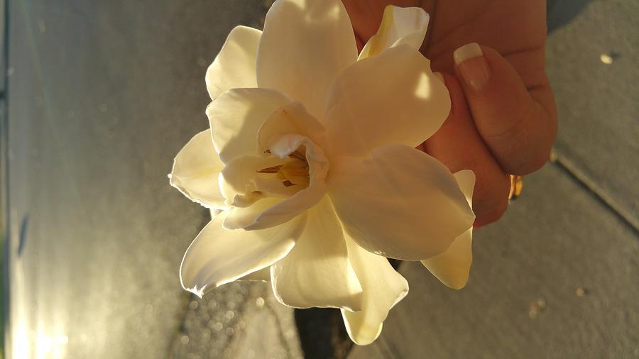 Nature Photograph - A Flower In Hand Beats.... by  Jerohn Brunson