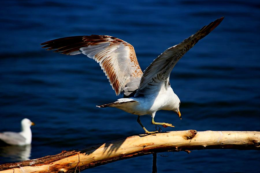 Birds Photograph - A Foot In Front by Amanda Struz