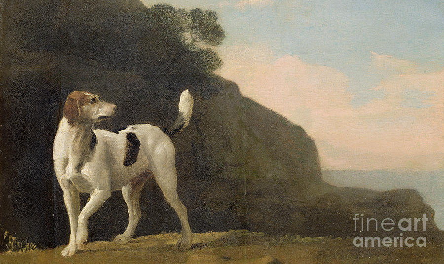 Foxhound Painting - A Foxhound by George Stubbs