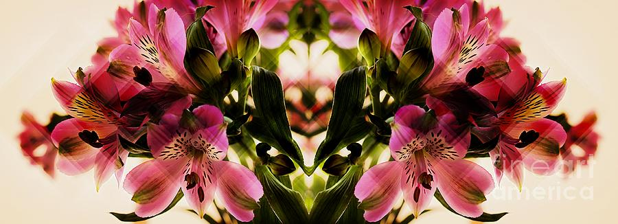 A Freesia Reflection Photograph