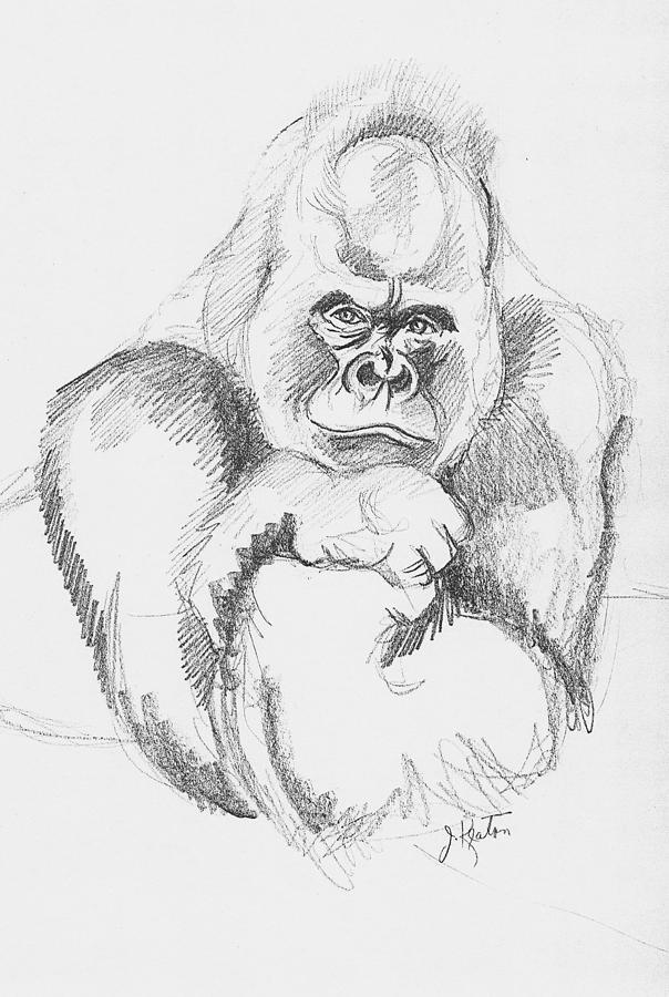 A Friendly Gorilla Drawing