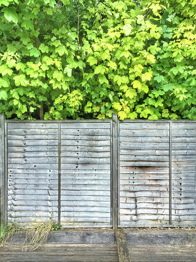 Agriculture Photograph - A Garden Fence by Tom Gowanlock