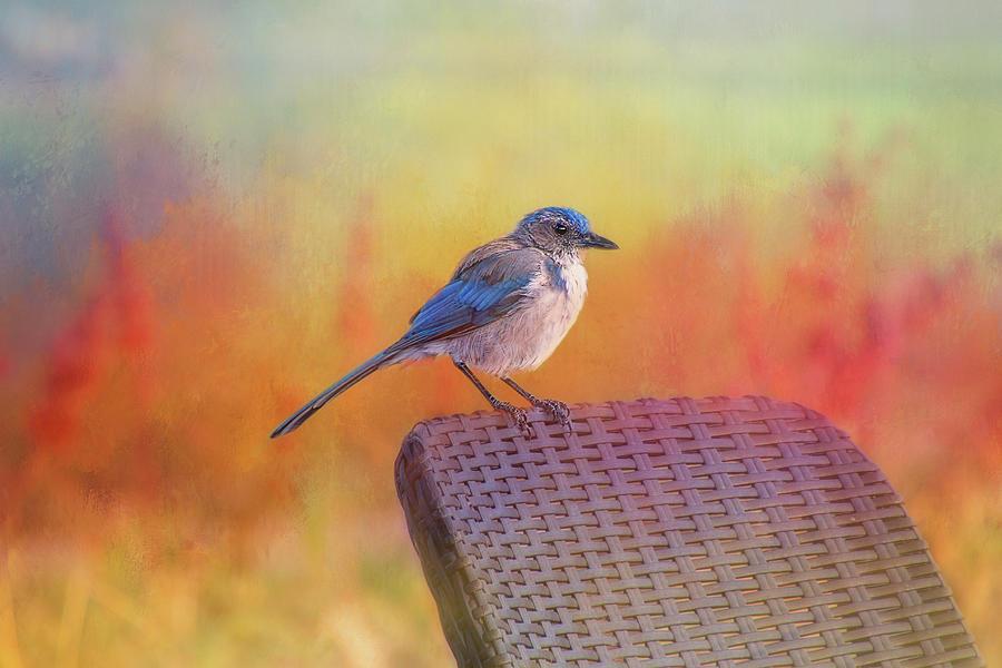 Bird Digital Art - A Garden Visit by Terry Davis