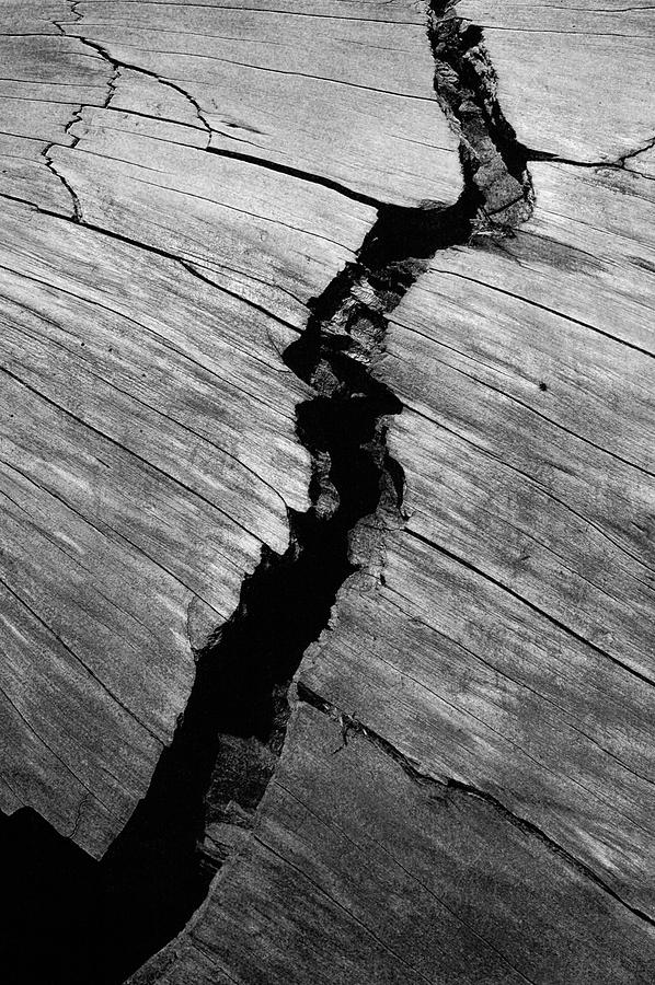 A Giants Death-bark Detail Photograph by Brigid Nelson