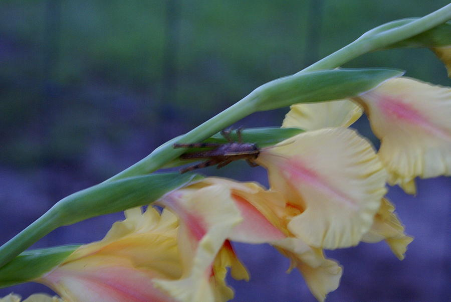 New Photograph - A Glad Hopper 3 by Debbie May
