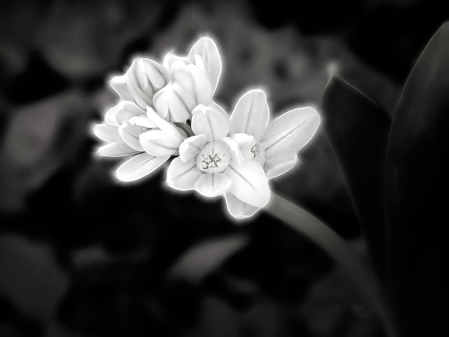 A Glowing Daffodil by Renette Coachman