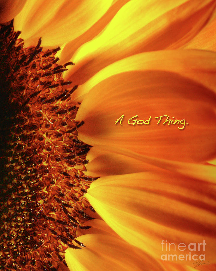Sun Flowers Photograph - A God Thing-2 by Shevon Johnson