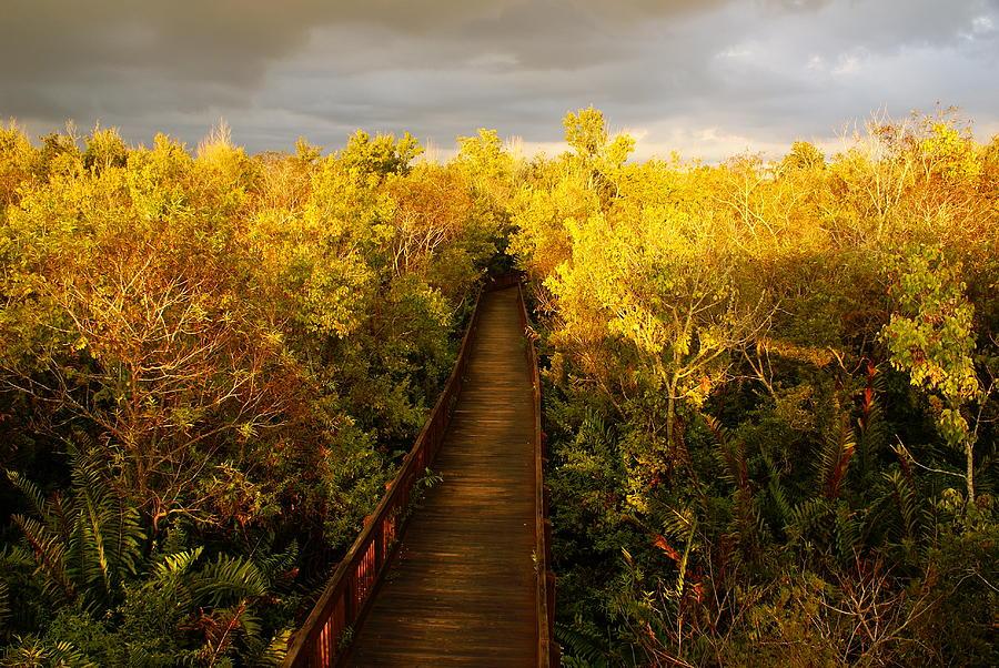 Landscapes Photograph - A Golden Fall by Jeffery Bennett