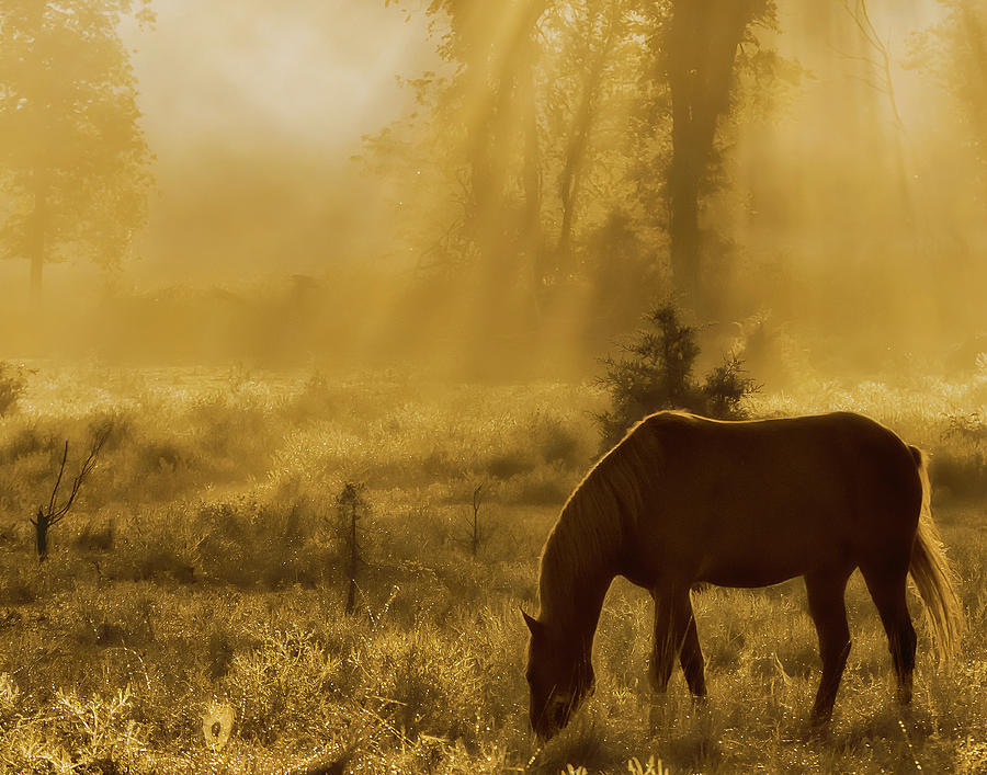 Equine Photograph - A Golden Moment by Ron  McGinnis