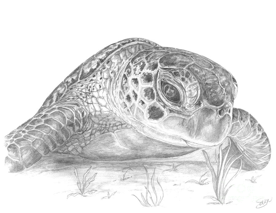 A Green Sea Turtle Grayscale Digital Art by Stacey May