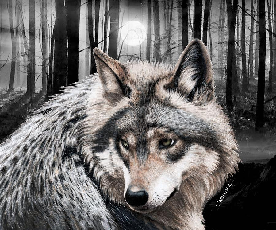 Wolf Drawing - A Grey Wolf  by Jasmina Susak