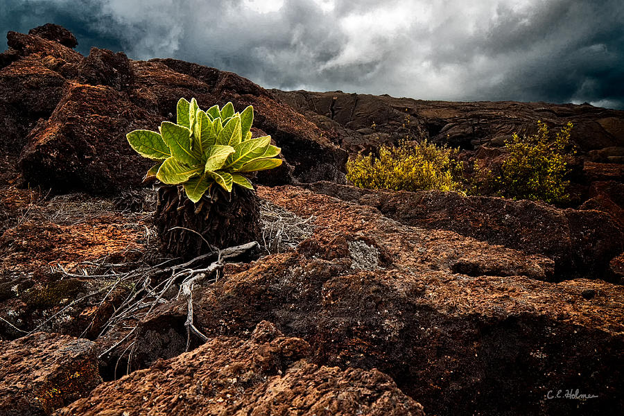 Hawaii Photograph - A Hard Existence by Christopher Holmes