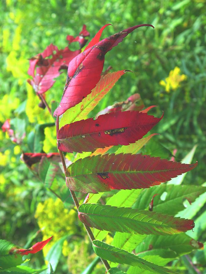 Leaves Photograph - A Hard Tough Summer by Ian  MacDonald