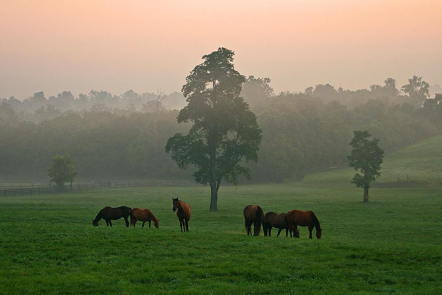 Horses Photograph - A Kentucky Morning. by Ulrich Burkhalter