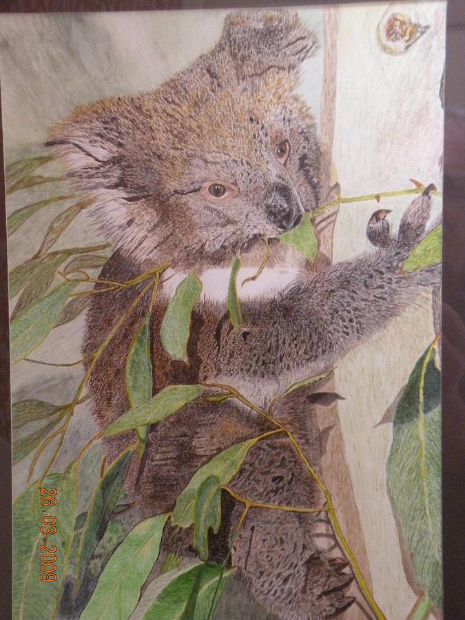 A Kool Koala Painting by Alan Webb