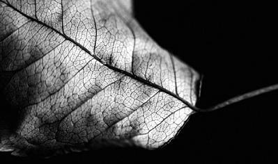 Silver Leaf Photograph - A Leaf by Lucia De Giovanni