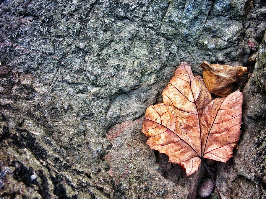 Leaves Photograph - A Leafs Bow by Scott Wendt Tom Wierciak