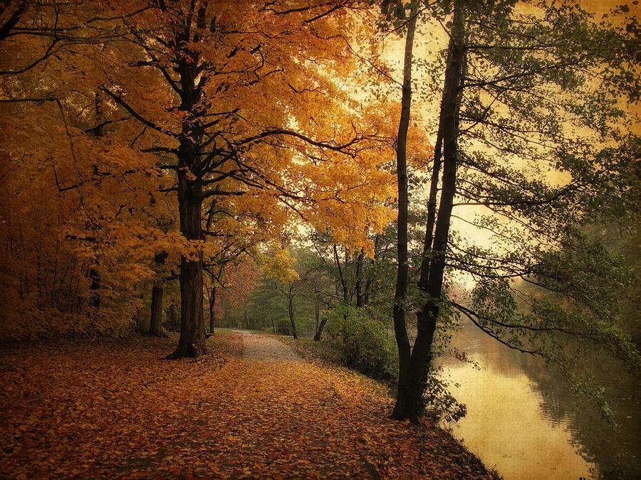 Landscape Photograph - A Leafy Path by Jessica Jenney