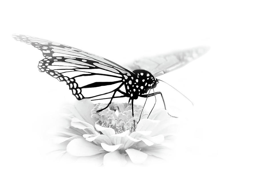 Butterfly Photograph - A Light Touch - Butterfly by Nikolyn McDonald