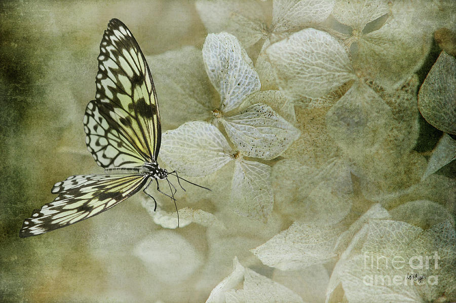 Butterfly Photograph - A Lighter Touch by Lois Bryan
