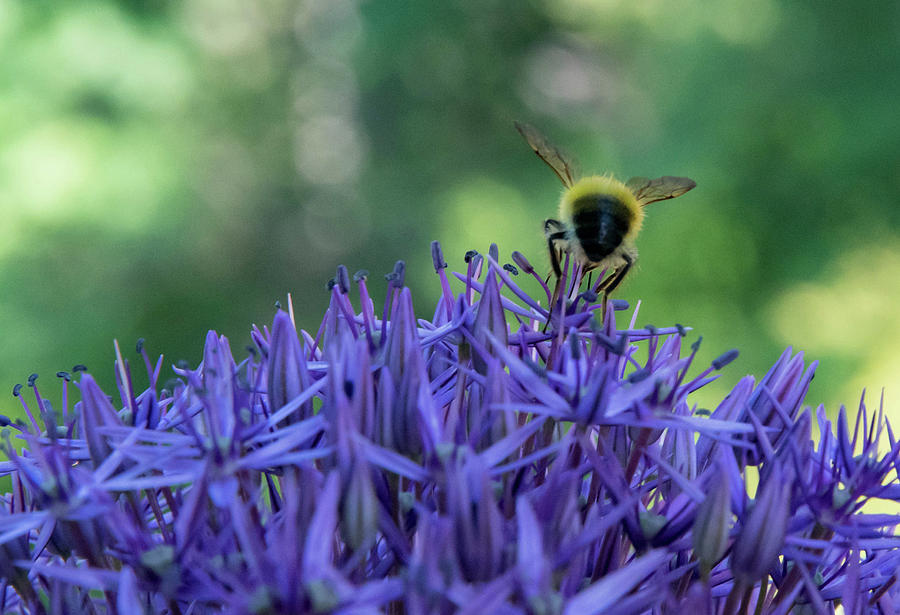 A Little Bee Hind by Jani Freimann