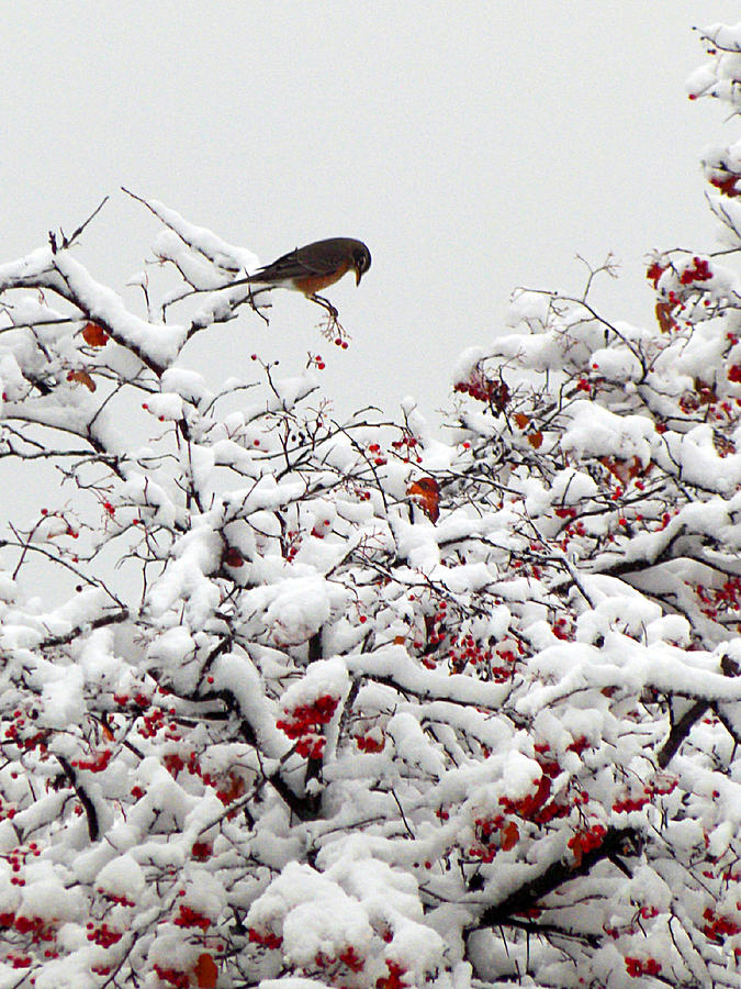 Winter Scenes Photograph - A Little Bird So Cheerfully Sings by Guy Ricketts
