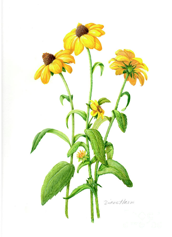 Black-eyed Susan Painting - A Little Bit Of Sunshine by Diane Harm