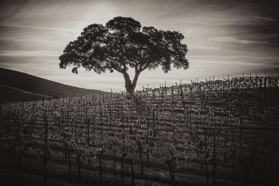 Paso Robles Photograph - A Little More Quiet by Joseph Smith