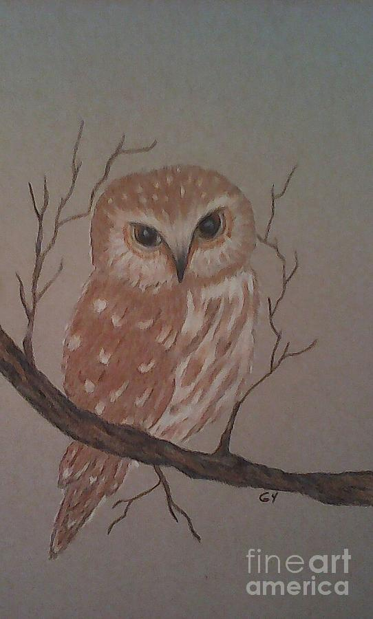Little Owl Drawing - A Little Owl by Ginny Youngblood