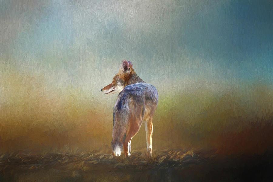 A Lone Coyote Digital Art
