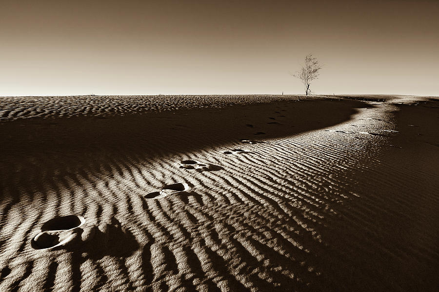 Desert Photograph - A Lone Tree On A Sand Dune  - Sepia - Monahans, Texas by Ellie Teramoto