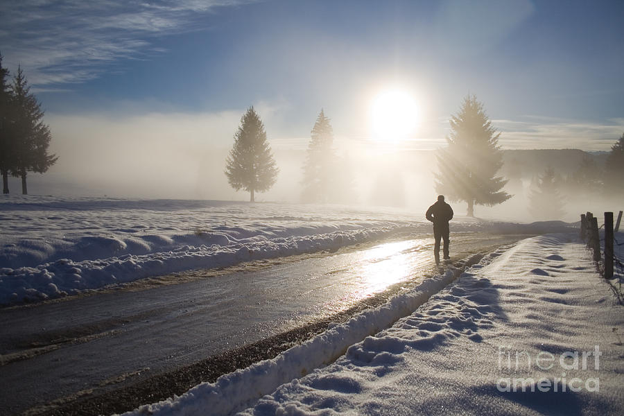 Landscape Photograph - A Lonely Winter by Gabriela Insuratelu