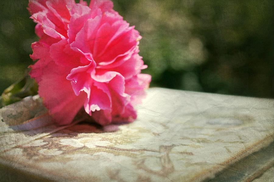 A Love Sonnet Photograph