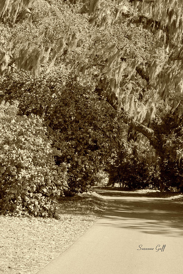 Sepia Photograph - A Lowcountry Springtime by Suzanne Gaff
