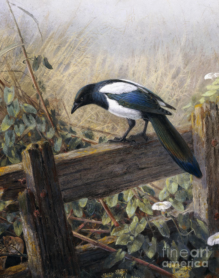Watercolor Painting - A Magpie Observing Field Mice by Johan Gerard Keulemans