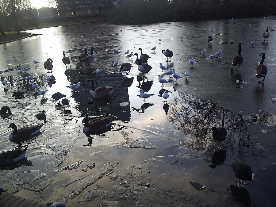 Birds Photograph - A Meeting by Moni Joan