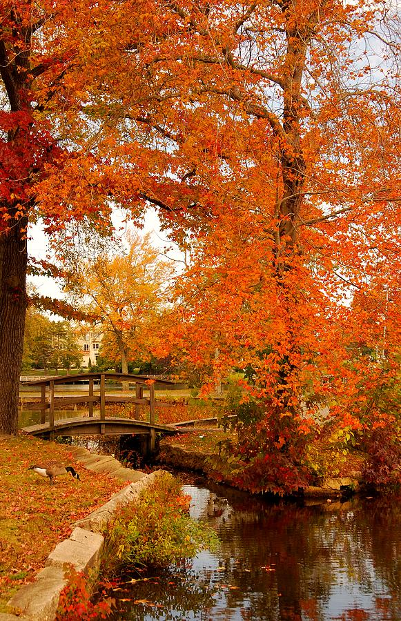 New Jersey Photograph - A Morning In Autumn - Lake Carasaljo by Angie Tirado