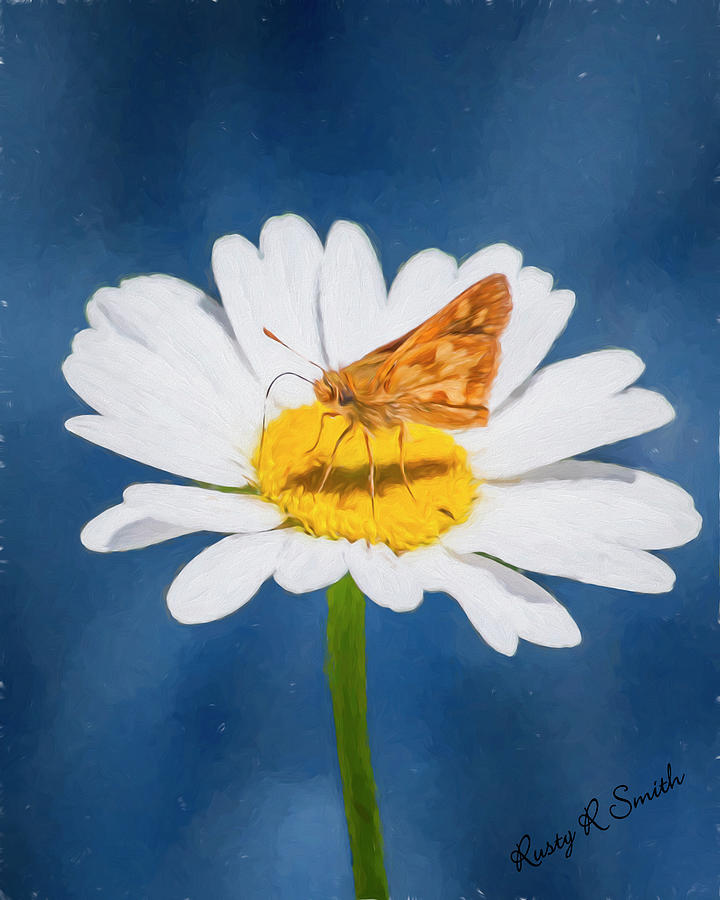 Summer Photograph - A Moth Collects Pollen On A Single Daisy Blossom. by Rusty R Smith