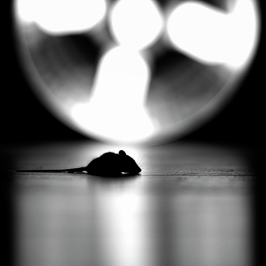 Mouse Photograph - A Mouse Tale by Ronald Van Grinsven