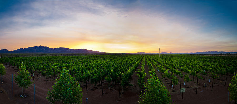 Wine Photograph - A New Day In The Field by Swift Family