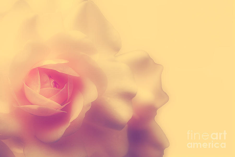 Rose Photograph - A New Day by Lois Bryan