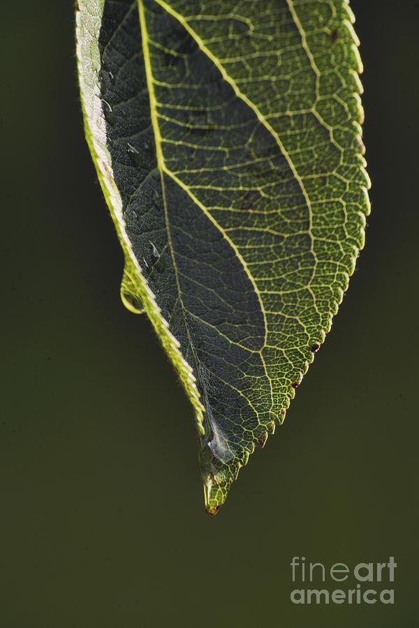 Apple Photograph - A New Day by Wedigo Ferchland