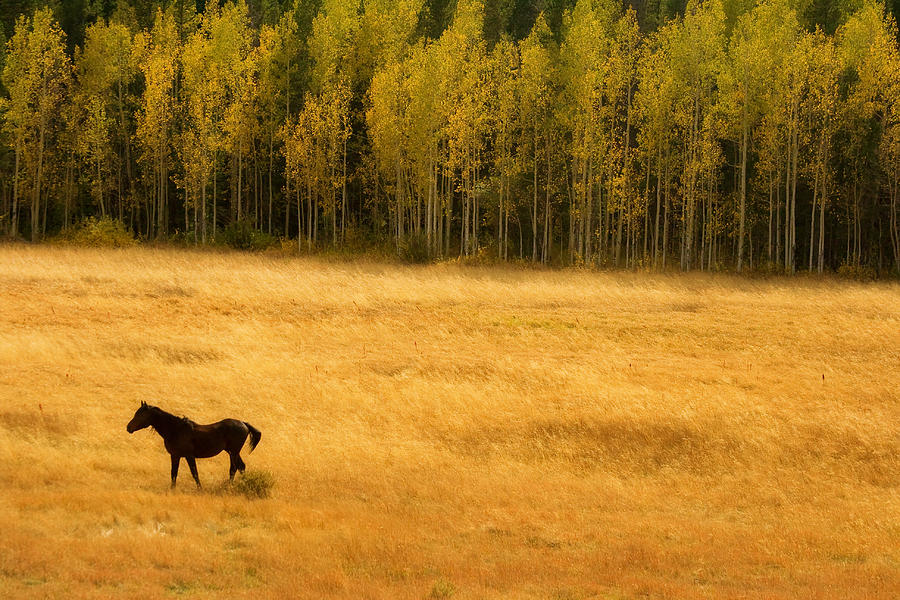 Gold Photograph - A Nice Autumn Day by James BO  Insogna