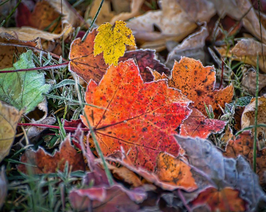 A November Welcome Photograph