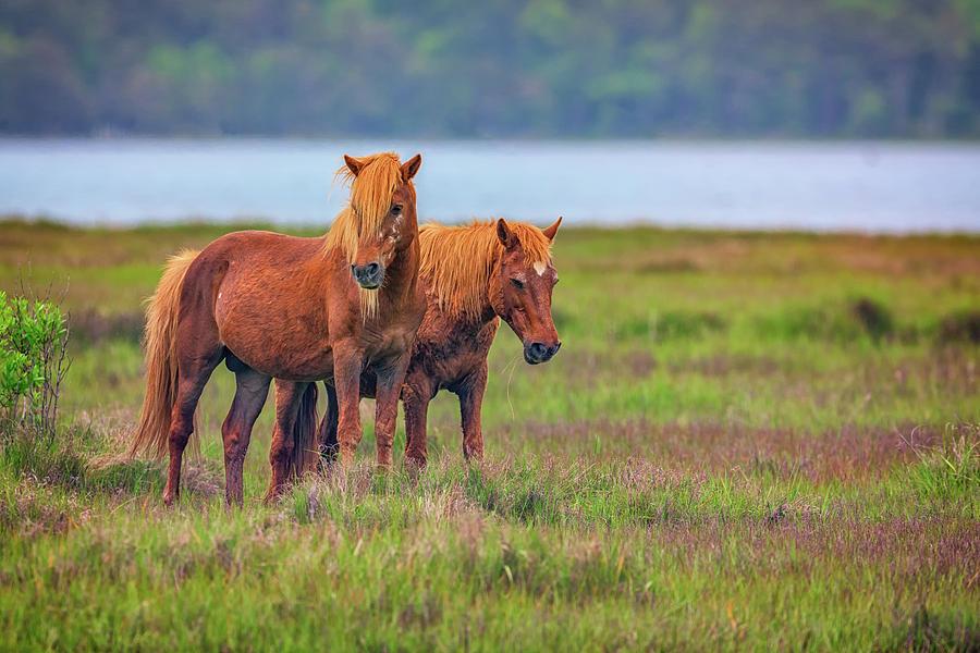 Horses Photograph - A Pair of Ponies by Rick Berk