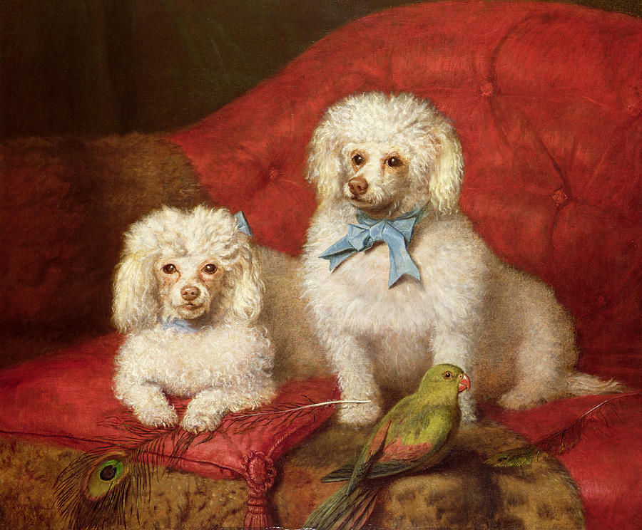 2 Painting - A Pair Of Poodles by English School